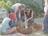 Planting Trees @ The Solar Garden