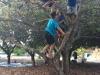 Climbing Trees @ Hayaar Hanadiv Binyamina