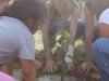 The Solar Garden planting trees